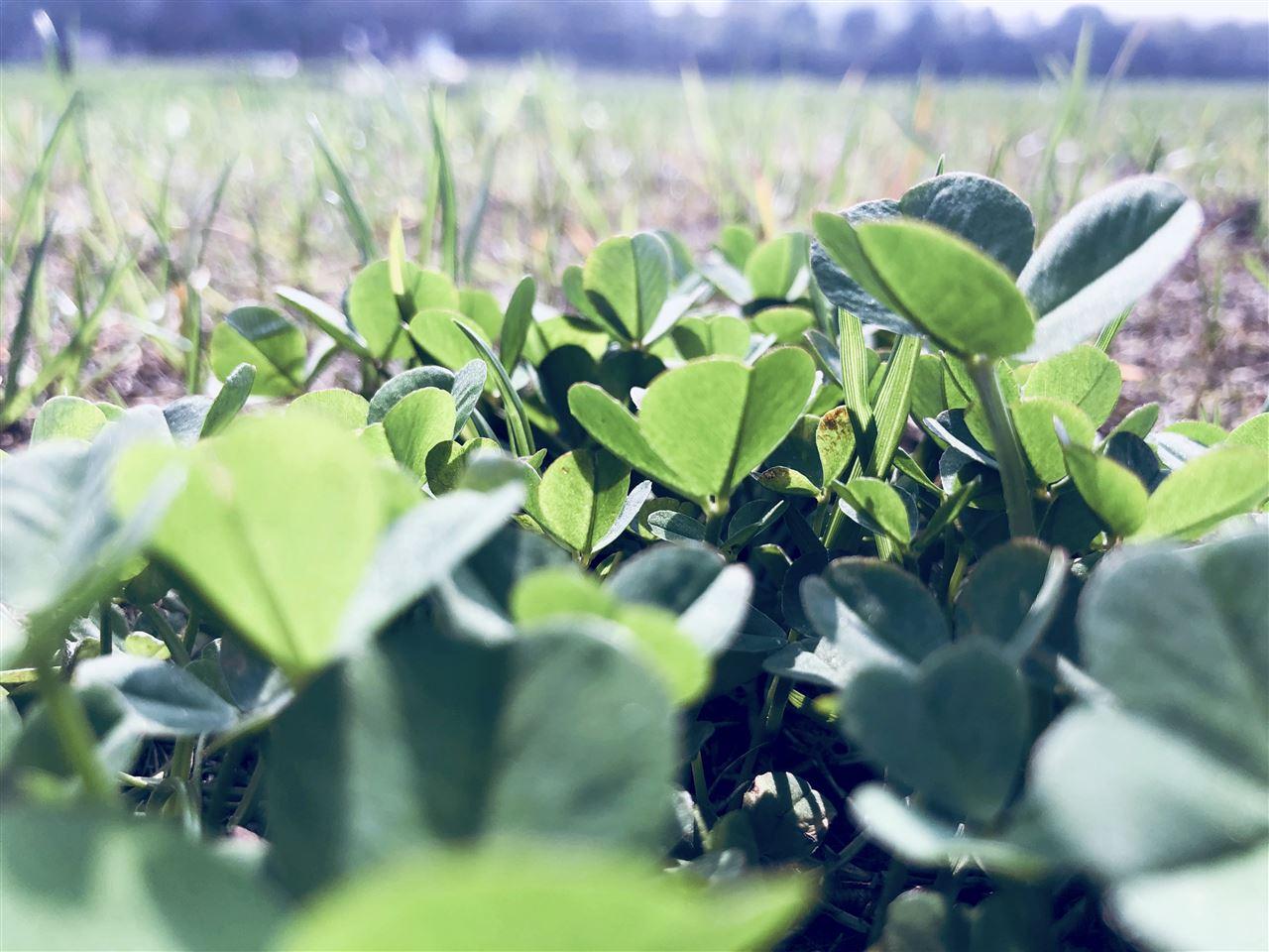 中科进出口中标华南农业大学实验仪器采购项目